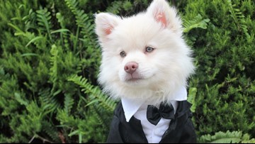 Midland Humane Coalition holds 9th annual Furr Ball