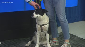 Katie visits the studio for Pet of the Week
