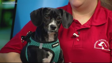 Chantilly visits the studio for Pet of the Week