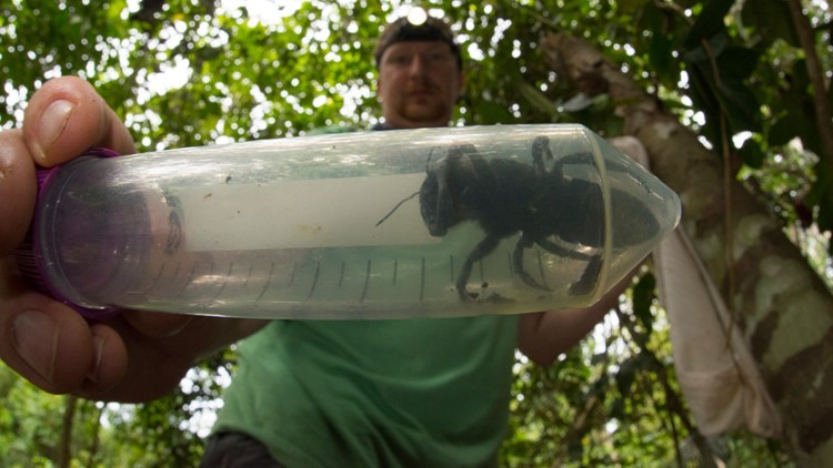 They found the 'holy grail' of bees and its terrifying