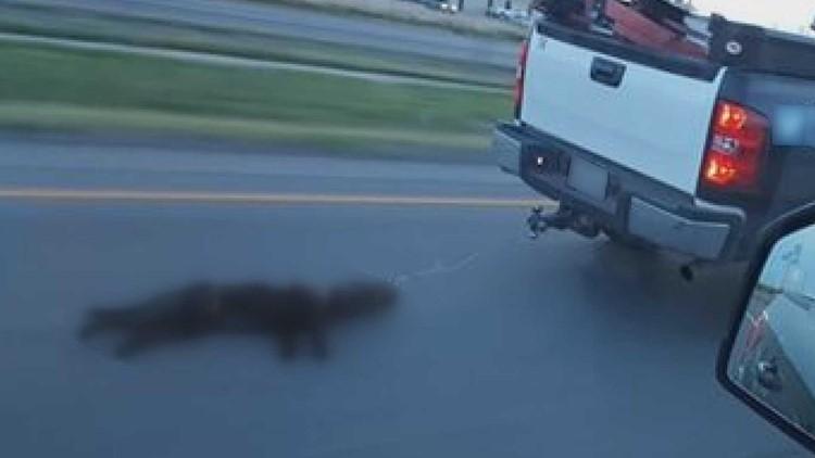 Dog dragged behind truck