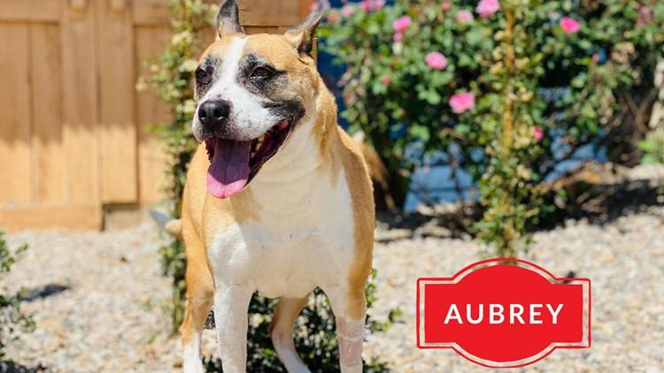 Meet Aubrey, NewsWest 9's Pet of the Week