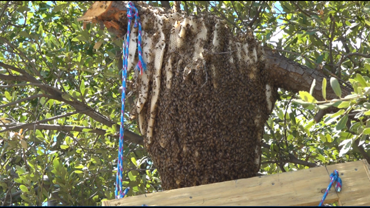 BEEHIVE IN MIDALND
