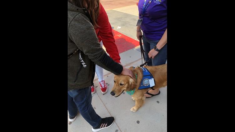 Comfort dog visits OHS