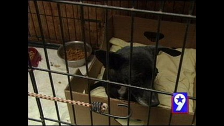 Humane Society of Odessa Seeking Donations for Pregnant Puppy Mill