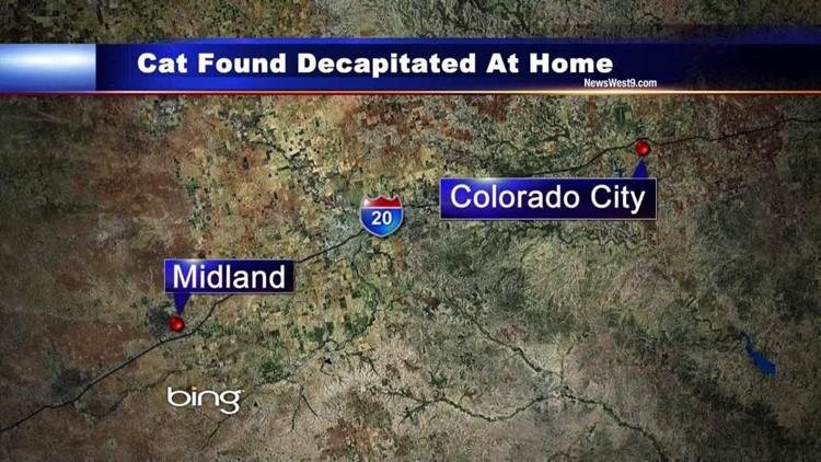 Colorado City Animal Control Investigating Animal Cruelty Case