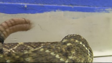 More snakes slithering in the Permian Basin