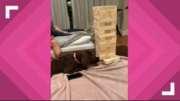 Video of Dallas dog playing Jenga garners hundreds of thousands of views