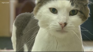 Bill to ban declawing of cats moving closer to vote in NY