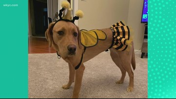 The dangers for dogs during trick-or-treat and Halloween